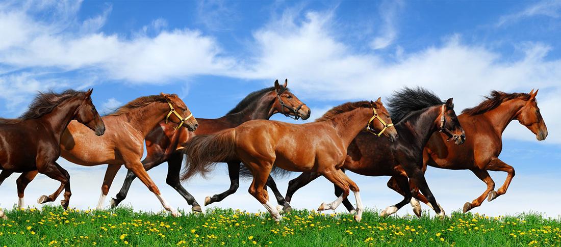 Pferderecht Rechtsanwalt